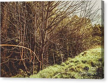 Winter Rural Tasmania Details Canvas Print by Jorgo Photography - Wall Art Gallery