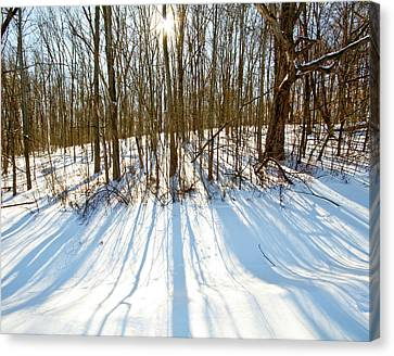 Winter Shadows Canvas Print by Tim Fitzwater