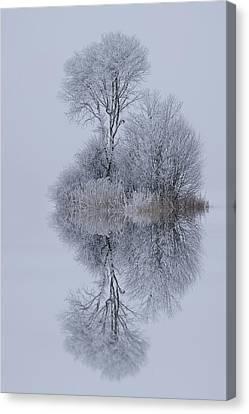 Winter Stillness Canvas Print by Norbert Maier