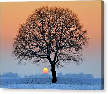 Winter Sunset With Silhouette Of Tree Canvas Print by Pierre Hanquin Photographie
