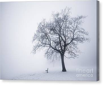 Winter Tree And Bench In Fog Canvas Print by Elena Elisseeva