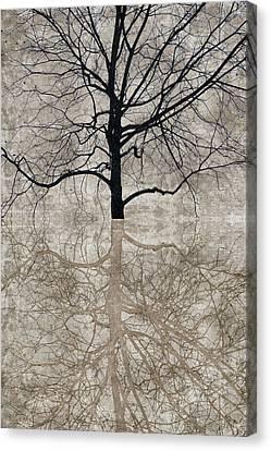Winter Tree Canvas Print by Carol Leigh
