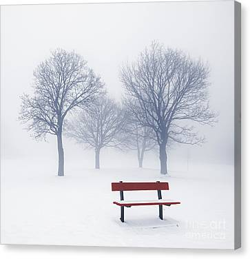 Winter Trees And Bench In Fog Canvas Print by Elena Elisseeva