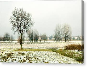 Winter Trees Canvas Print by Silvia Ganora