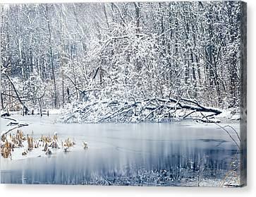 Winter Wonderland 2 Canvas Print by Shara Lee
