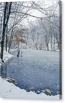 Winter Wonderland 3 Canvas Print by Shara Lee
