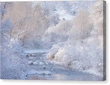 Winter Wonderland - Colorado Canvas Print by Darren White