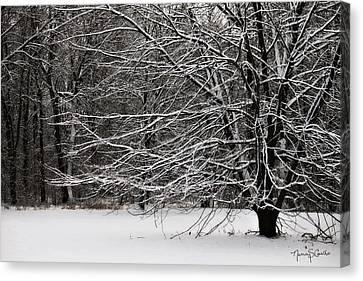 Winter Wonderland Canvas Print by Nancy  Coelho