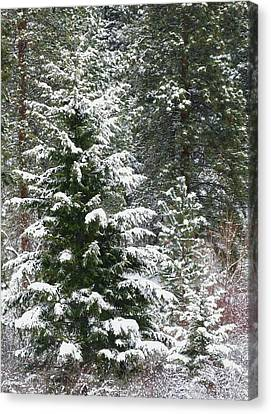 Winter Woodland Canvas Print by Will Borden