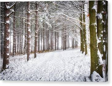 Winter Woods And Path -  Retzer Nature Center  Canvas Print by Jennifer Rondinelli Reilly - Fine Art Photography