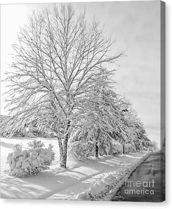 Winterland Canvas Print by Marcia Lee Jones