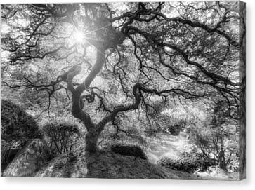 Witches Light Canvas Print by Darren  White