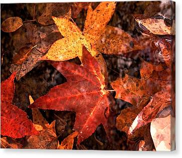With Love - Autumn Pond Canvas Print by Theresa  Asher