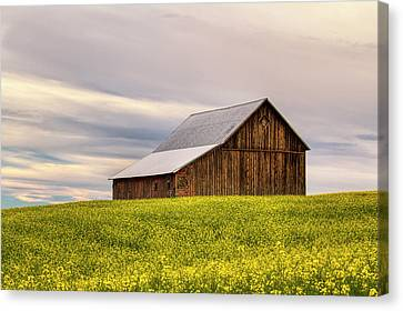 Withdrawn Canvas Print by Mark Kiver