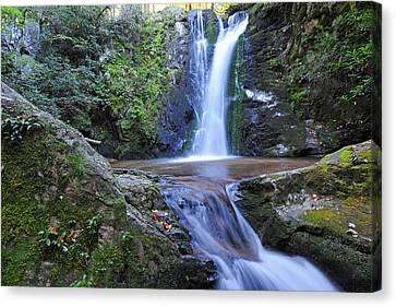 Wolf Creek Falls Canvas Print by Alan Lenk
