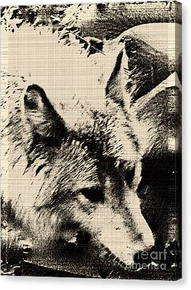 Wolf Lite Canvas Print by Debra     Vatalaro
