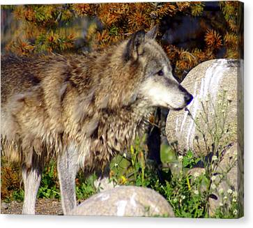 Wolf On Patorl Canvas Print by Marty Koch