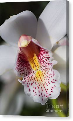 Wonders Of A Orchid Canvas Print by Joy Watson