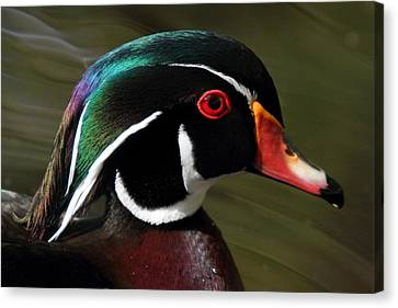 Wood Duck At Beaver Lake Stanley Park Vancouver Canada Canvas Print by Pierre Leclerc Photography