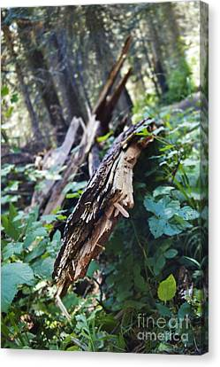Wood In The Forest Canvas Print by Janie Johnson