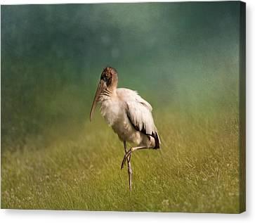 Wood Stork - Balancing Canvas Print by Kim Hojnacki