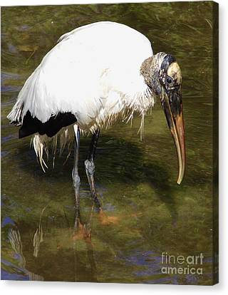 Does The Water Make My Feet Look Big Canvas Print by D Hackett