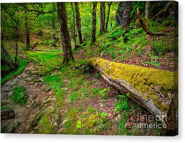 Woodland Canvas Print by Adrian Evans