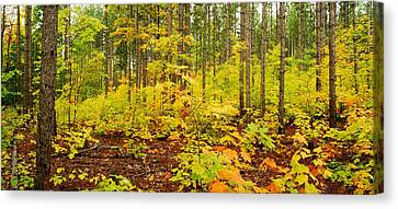 Woodland Panorama Canvas Print by Michael Peychich