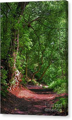 Woodland Path Canvas Print by Chris Smith