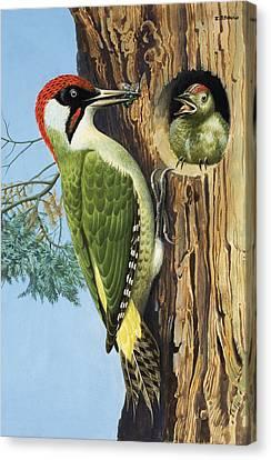 Woodpecker Canvas Print by RB Davis