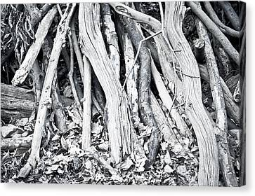 Woodpile Canvas Print by Tom Gowanlock