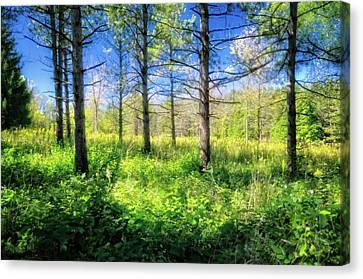 Woods Of Retzer Nature Center Canvas Print by Jennifer Rondinelli Reilly - Fine Art Photography