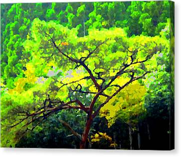 Woods Canvas Print by Roberto Alamino