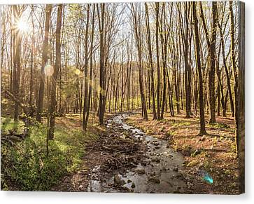 Woods Wondering Canvas Print by Kristopher Schoenleber