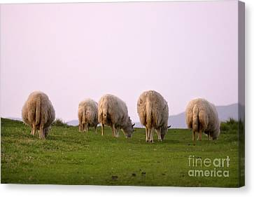 Wooly Bottoms Canvas Print by Angel  Tarantella