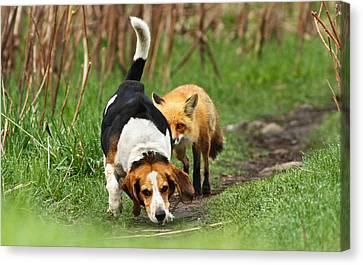 World\\\'s Worst Hunting Dog Canvas Print by Mircea Costina