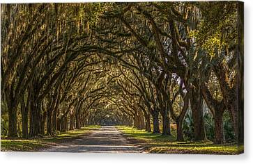 Wormsloe Historic Site Canvas Print by Bryan Xavier