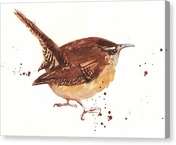 Wren - Cheeky Wren Canvas Print by Alison Fennell