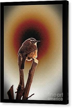 Wren At Sundown Canvas Print by Sue Melvin