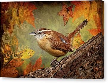 Wren In Autumn  Canvas Print by Bonnie Barry