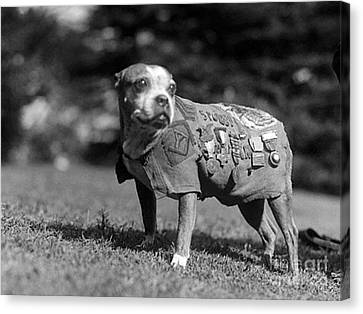 Wwi, Sergeant Stubby, American War Dog Canvas Print by Science Source