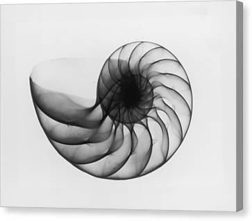 X-ray Nautilus Shell Canvas Print by Edward Charles Le Grice