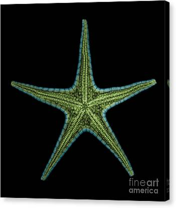 X-ray Of Starfish Canvas Print by Ted Kinsman
