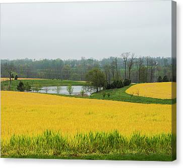 Yellow And Green Canvas Print by Bill Caldwell