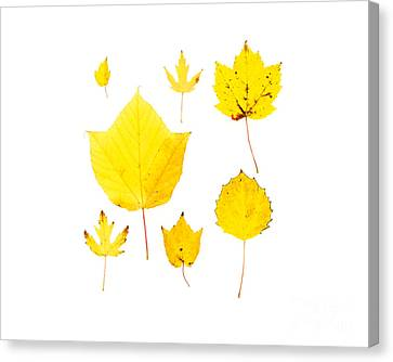 Yellow Autumn Leaves Canvas Print by Jennifer Booher