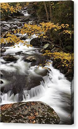 Yellow Contrast Canvas Print by Jon Glaser