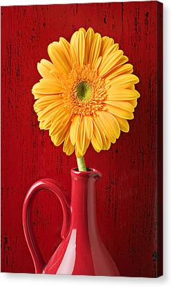 Yellow Daisy In Red Vase Canvas Print by Garry Gay