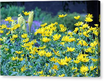 Yellow Everywhere Canvas Print by Becky Lodes