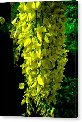 Flowers Canvas Print featuring the photograph Yellow Falls by Roberto Alamino