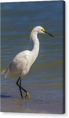 Yellow Feet Canvas Print by Marvin Spates